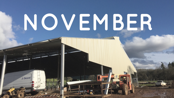 Monthly Barn Report: November