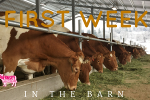 First Week in the Barn